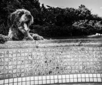 Ziggy at Precious pool